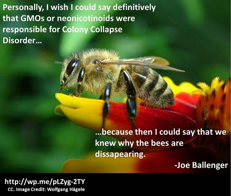 Colony Collapse Disorder: An Introduction   A Better Food System   Scoop.it