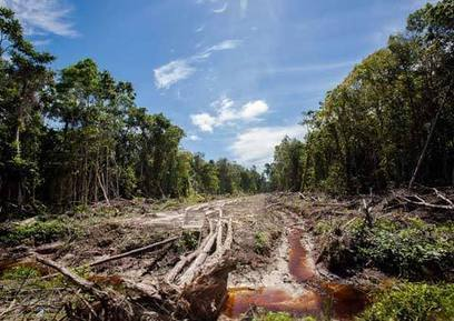 Can Indonesia increase palm oil output without destroying its forest ... | Science | Scoop.it