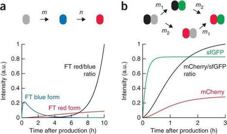 Tandem fluorescent protein timers for in vivo analysis of protein dynamics. - Nature Biotech | Plant Cell Biology and Microscopy | Scoop.it