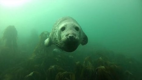 Seal of Approval | Michel Braunstein Underwater Photography News | Scoop.it