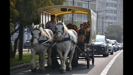 Boulogne: une fête du Cheval plus ensoleillée que jamais | Tourisme Boulogne-sur-Mer | Scoop.it
