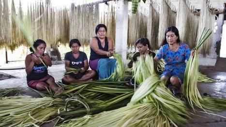Mujer rural no es mujer agraria   Mujeres el 51 por ciento de la población   Scoop.it