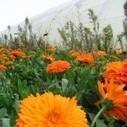 Biodiversité : Résultats d'expérimentations bio 2012 | Chimie verte et agroécologie | Scoop.it