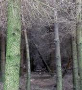 Nueva herramienta para el cálculo de la biomasa y carbono forestal   BIOMASA   Scoop.it