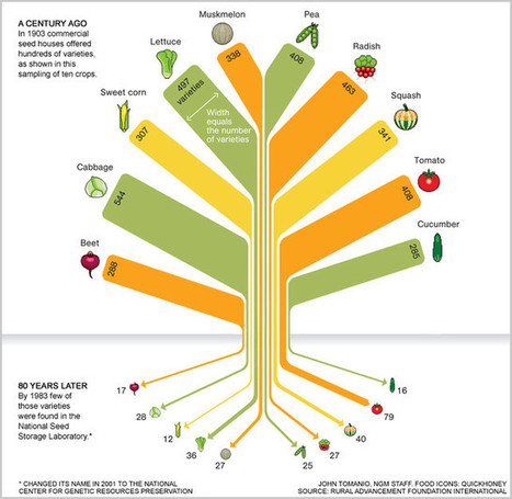 Infographic: In 80 Years, We Lost 93% Of Variety In Our Food Seeds | BASIC VOWELS | Scoop.it