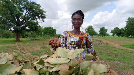 Forgotten Crops May Hold Key to Nutritional Security | Organic Farming | Scoop.it