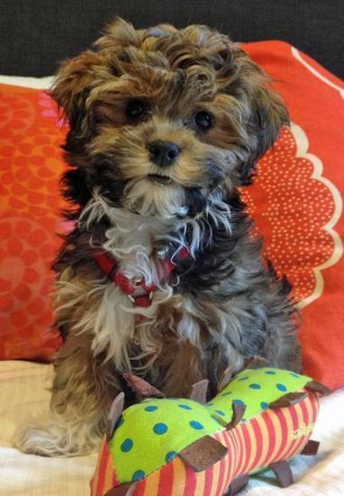 Puppies, Cute Puppy Names, Pictures of Puppies & More | Daily Puppy | sarah.h melissa | Scoop.it
