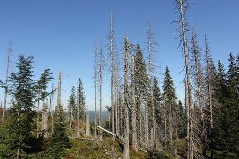 What Global Warming Means For Old, Tall Trees | Sustain Our Earth | Scoop.it