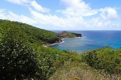 Twitter / AntilliaCultura: On the trail to Bequia Head... ... | Bequia - All the Best! | Scoop.it