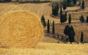 """Siena Carbon Free"", a un passo dall'obiettivo per un territorio a emissioni zero 