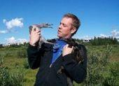 Iceland – a hotbed for bird flu viruses | Virology News | Scoop.it