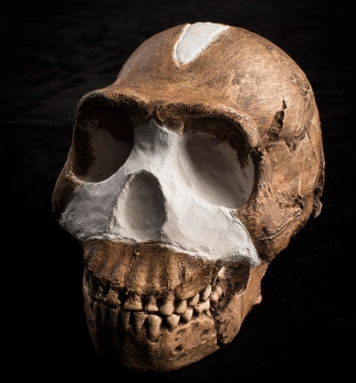 New species of human relative added to family tree | Past Horizons | Kiosque du monde : A la une | Scoop.it