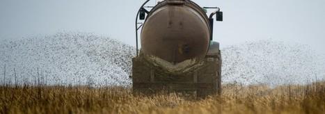 Umwelt – Gefährliches Geschäft mit der Gülle | Agrarforschung | Scoop.it