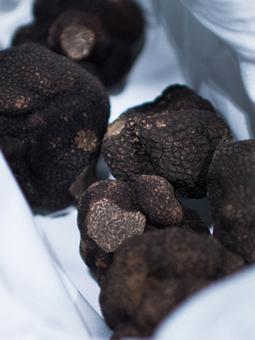 Quelle soit blanche ou noire – La truffe cultive le secret – 12 choses à savoir ou à oublier sur la Truffe -|Chefs Pourcel Blog | Epicure : Vins, gastronomie et belles choses | Scoop.it
