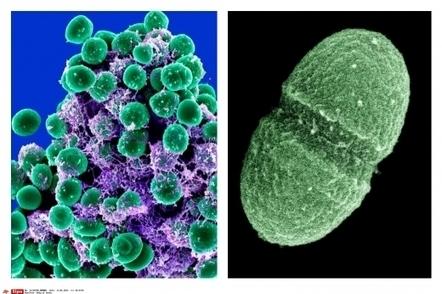 Combien le corps humain renferme -t-il de bactéries   Sciences & Avenir   biologie médicale   Scoop.it