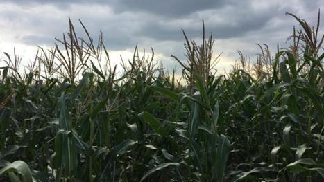 La Commission met un coup d'arrêt aux biocarburants   Energies Renouvelables   Scoop.it