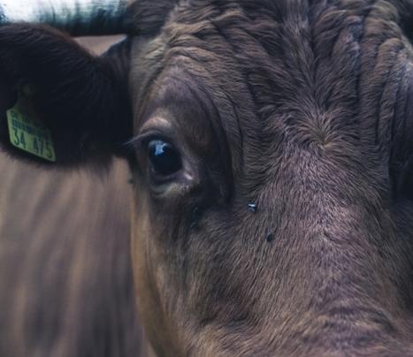 Rapport TAFTA : Agriculture européenne, la grande braderie - Les Amis de la Terre   OGM, Pesticides, Les alternatives et les problèmes de l'agriculture chimique   Scoop.it