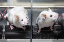 An end to animal testing for drug discovery? | Bio Sciences | Scoop.it