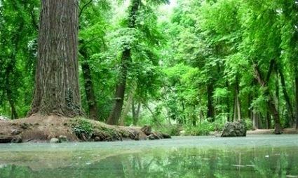 América Latina tiene el 57% de los bosques primarios | Agua | Scoop.it