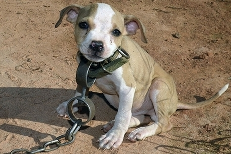 Firsthand Report from Massive Dog Fighting Bust | End dog fighting! | Scoop.it