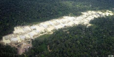Le minier et la « bonne conduite »   Site d'information généraliste et politique en Guyane ⎢Guyaweb   Guyane : alertes mine d'or Nationale   Scoop.it