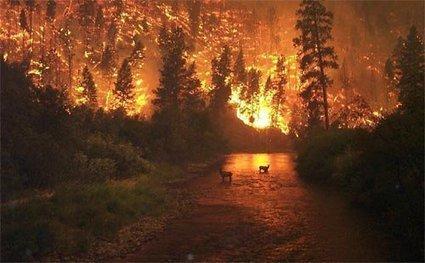 Los incendios forestales y las centrales de biomasa | Planeta Neutro | Medio ambiente y energia | Scoop.it