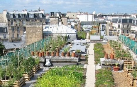 INRA - diversité de l'agriculture urbaine | agriculture urbaine | Scoop.it