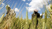 BBSRC mention, Doug Kell quote: Will politicians ever get the UK public to swallow GM food? - Channel 4 News | BIOSCIENCE NEWS | Scoop.it