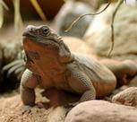 Voyage insolite : dormir avec des reptiles en Allemagne | Allemagne tourisme et culture | Scoop.it