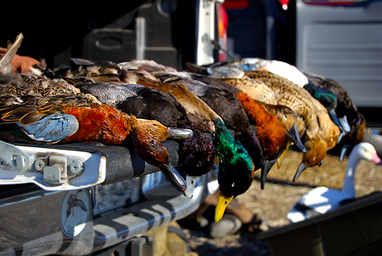 On Killing Wild Game for Food | Hunter Angler Gardener Cook | Foodie | Scoop.it