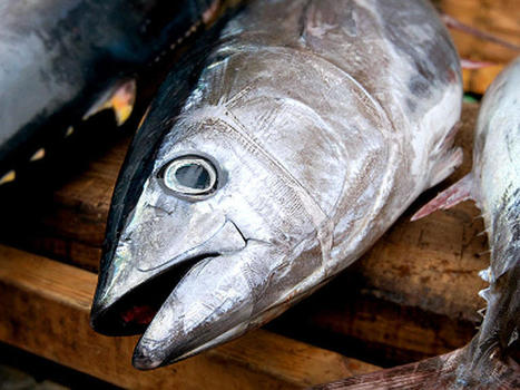 Limiting consumption of fish may not affect mercury levels in pregnant women - CBS News | Gender, Religion, & Politics | Scoop.it