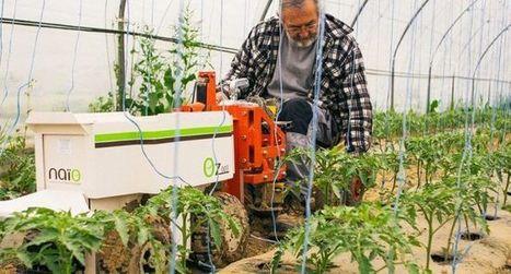 Agriculture: Ce robot toulousain qui révolutionne le travail des maraîchers   Vous avez dit Innovation ?   Scoop.it