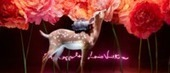 Sofia Coppola relooke les vitrines du Bon Marché | Luxury Marketing & Communication | Scoop.it