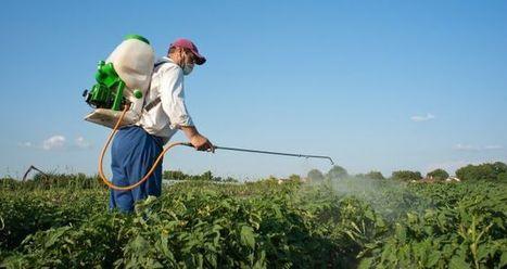 Agricultura: el mejor sector de España en internacionalización - Cinco Días | EcoAgroPaisaje | Scoop.it