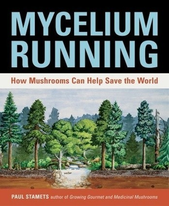 6 Ways Mushrooms Can Save the World: Paul Stamets on TED.com | Healing our planet | Scoop.it