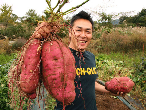 Natural GMO? Sweet Potato Genetically Modified 8,000 Years Ago | Geography Education | Scoop.it