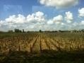La route des vins de Bordeaux en Graves et Sauternes matérialisée par 63 panneaux | Le vin quotidien | Scoop.it