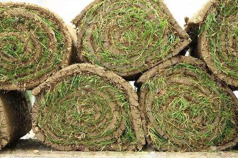 Рулонные газоны купить – быстро всё озеленить! | ars | Scoop.it