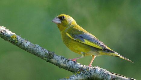 Les oiseaux nicheurs continuent de disparaître en France - notre-planete.info | Biodiversité | Scoop.it
