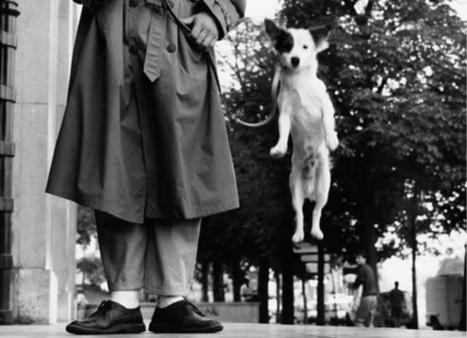Dog by Elliott Erwitt | VIM | Scoop.it