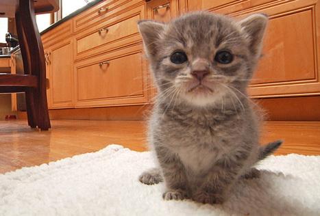 Volunteer Hero Saves 10,000 Kittens' Lives (VIDEO) | life | Scoop.it