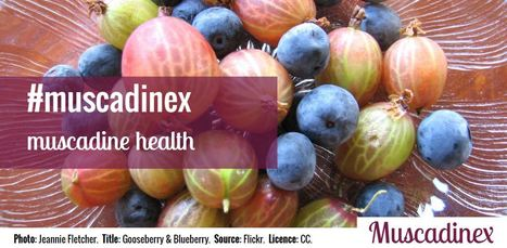 Could Muscadine Grape Seeds Offer Cardiovascular Benefits? | Muscadinex Longevity | Scoop.it