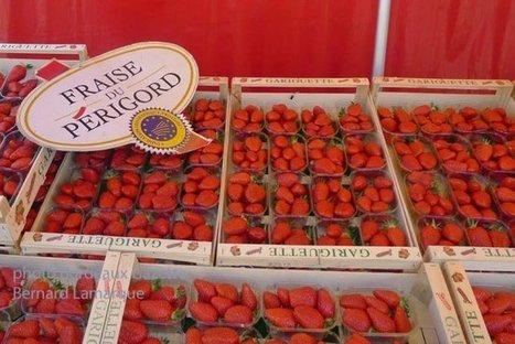 Le retour des fraises | Bordeaux Gazette | Scoop.it