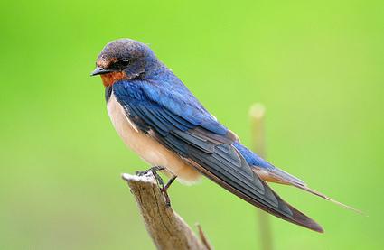 La situation des oiseaux du monde est sombre mais pas désespérée   pour mon jardin   Scoop.it