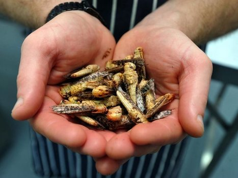 Restaurant with insect-centric menu opens in Wales | Entomophagy: Edible Insects and the Future of Food | Scoop.it