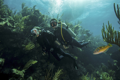 Philippe Cousteau: 'Blue Halo' #Reserve Would Protect Marine Life In #Sargasso ~ Could be #Bermuda's little #gem*   Rescue our Ocean's & it's species from Man's Pollution!   Scoop.it