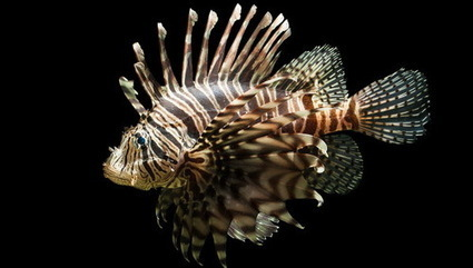 Una especie invasora destruye hasta el 95% de la biodiversidad en el Atlántico | Medio ambiente, Conservación y Biodiversidad | Scoop.it