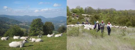 Pastoralisme et dynamiques territoriales - Séminaire de l'Association française de pastoralisme le 8 nov 2016 | Montpellier SupAgro | Agronomie, élevage, eau et sol - Montpellier SupAgro | Scoop.it