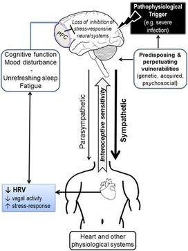 PLOS ONE: Reduced Cardiac Vagal Modulation Impacts on Cognitive Performance in Chronic Fatigue Syndrome | Interconnections & human biology | Scoop.it