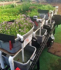 Aquaponics career skills nurtured to expand career pathways - UH System Current News | Aquaponics in Action | Scoop.it